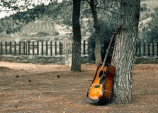 gitara outdoors kłaść na drzewnych i nieżywych żółtych liściach na gr obrazy royalty free