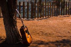gitarr på ett träd på en parkera royaltyfri fotografi