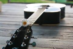 Gitarrenschnur und -gänseblümchen Stockfotografie