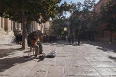 Gitarrist under ett träd arkivbild