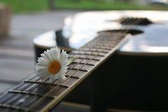 Gitary smyczkowa stokrotka Zdjęcia Royalty Free