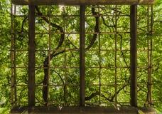Gitter, dessen Blätter von einem hellgrünen mit Strahlen von s punktiert werden stockfotografie