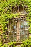 Gitterfenster Lizenzfreies Stockbild