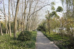 Gity Green Road along the Beijing-Hangzhou Grand Canal in a sunny afternoon Royalty Free Stock Image