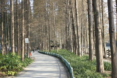 Gity Green Road along the Beijing-Hangzhou Grand Canal in a sunny afternoon Royalty Free Stock Images