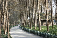 Gity Green Road along the Beijing-Hangzhou Grand Canal in a sunny afternoon Royalty Free Stock Photo
