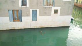 Giudecca stock foto