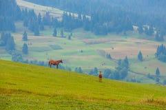 Giumenta e puledro sveglio che pascono sul pendio di collina in montagne Immagini Stock Libere da Diritti
