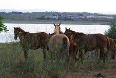 Giumente con i puledri sui precedenti dell'erba Fotografie Stock Libere da Diritti