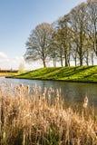 Giunco comune ingiallito nella priorità alta di un paesaggio olandese Immagine Stock Libera da Diritti