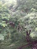giungla Immagini Stock