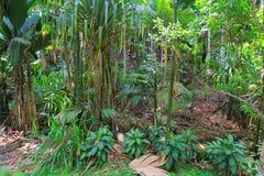 giungla Fotografia Stock Libera da Diritti