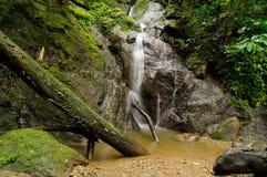 Giungla colombiana selvaggia di Darien Fotografie Stock