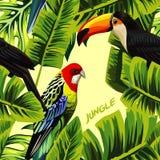 Giungla con le foglie della banana del pappagallo del tucano Immagine Stock Libera da Diritti
