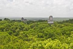 Giungla dalla vista aerea in Tikal, Guatemala, America Centrale immagine stock libera da diritti
