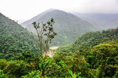 Giungla del paesaggio in Amazzonia dell'Ecuador Immagine Stock