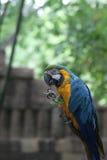 Giungla del pappagallo immagine stock