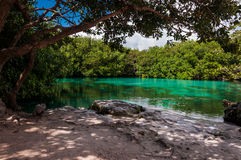 Giungla della mangrovia del calcare di Cenote Messico Tulum delle case Fotografie Stock