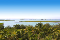 Giungla della palma della laguna della mangrovia della giungla Fotografia Stock Libera da Diritti