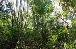 Giungla di bambù Fotografie Stock Libere da Diritti