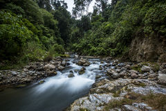 Giungla di galleggiamento del fiume Fotografie Stock