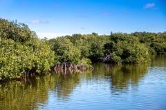 Giungla di Mangroove nella regione selvaggia dell'America Centrale fotografia stock