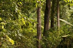 Giungla ed alberi Fotografie Stock Libere da Diritti