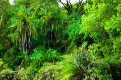 Giungla, fondo degli alberi del cespuglio in Africa. Tsavo ad ovest, Kenia Fotografie Stock