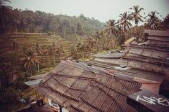 Giungla indonesiana Fotografie Stock Libere da Diritti