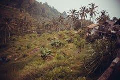 Giungla indonesiana Fotografia Stock Libera da Diritti