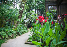 Giungla indonesiana Fotografie Stock