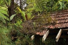 Giungla malese che riprende il loro dominio in collina di Fraser Fotografie Stock