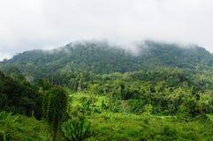 Giungla selvaggia tropicale dell'Indonesia - Borneo Immagini Stock