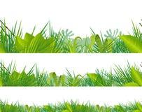 Giungla senza cuciture e vegetazione tropicale illustrazione vettoriale