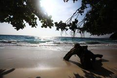 Giungla sulla bella isola Fotografia Stock