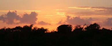 Giungla Treeline fotografia stock