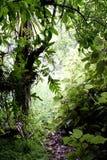 Giungla tropicale fotografie stock libere da diritti