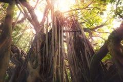 Giungla tropicale immagine stock libera da diritti
