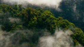 Giungla tropicale asiatica della foresta pluviale tropicale fotografie stock