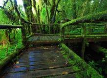Giungla verde Fotografie Stock