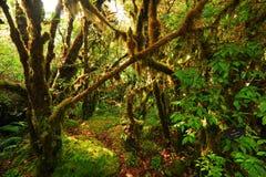Giungla verde Fotografia Stock