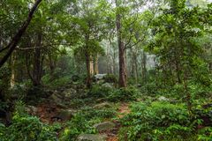 Giungla verde Forest Nature Background immagini stock