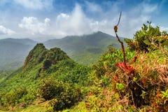 Giungla vibrante di EL Yunque di vista Immagini Stock