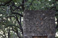 Giunti della corda in pietra ed in alberi Fotografia Stock Libera da Diritti