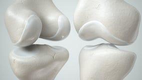 Giunto di ginocchio con la rappresentazione anteriore e retro- sana 3D della cartilagine, Fotografia Stock Libera da Diritti