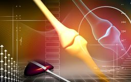 Giunto umano dell'osso del piedino Fotografia Stock