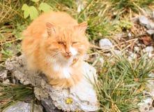 Giusto gatti smarriti danneggiati un occhio Fotografia Stock Libera da Diritti