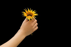 Give a flower. Hands holding an yellow flower Royalty Free Stock Photography