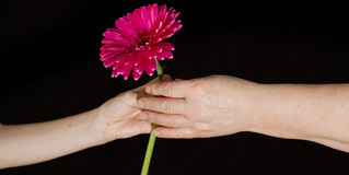 Give a flower Stock Image