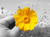 Give flowers. Give color flower in a gray landscape Stock Photos